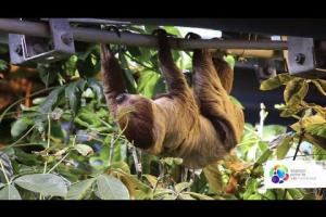 Are sloths really that lazy?