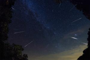 Observe the Perseid meteor shower from the Jardin botanique