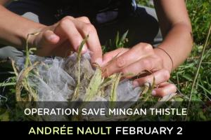 Operation Save Mingan thistle