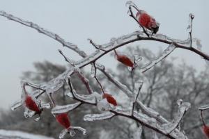 Winter's mots popular questions