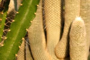 La texture et la forme des cactus sont très variables.