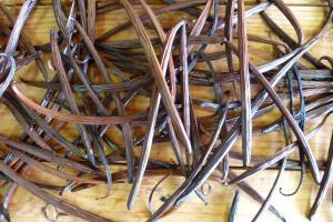 Flat-leaved vanilla