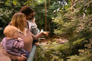 Visitors on a tour of the Tropical Rainforest.