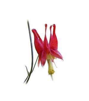 Québec native plants