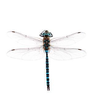 Les insectes aquatiques