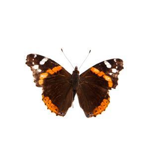 Les papillons et les chenilles