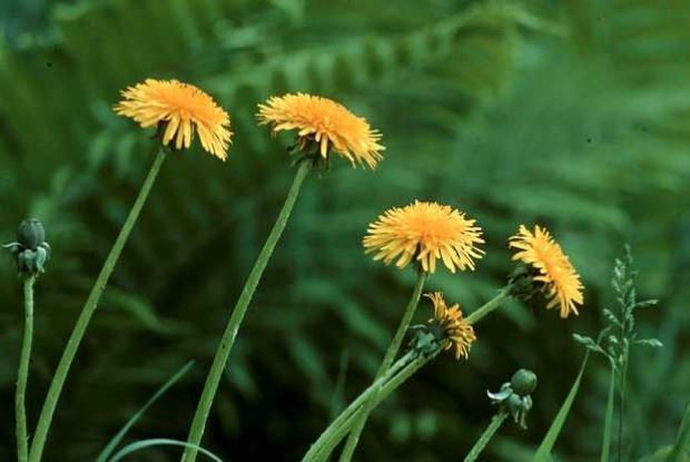 Undesirable Plants