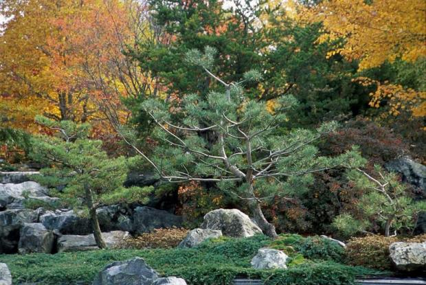 The plants of the Japanese Garden