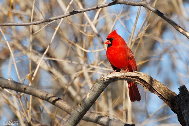 Jardin pour les oiseaux espace pour la vie for Oiseaux des jardins en hiver