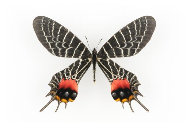 dons d 39 insectes espace pour la vie. Black Bedroom Furniture Sets. Home Design Ideas