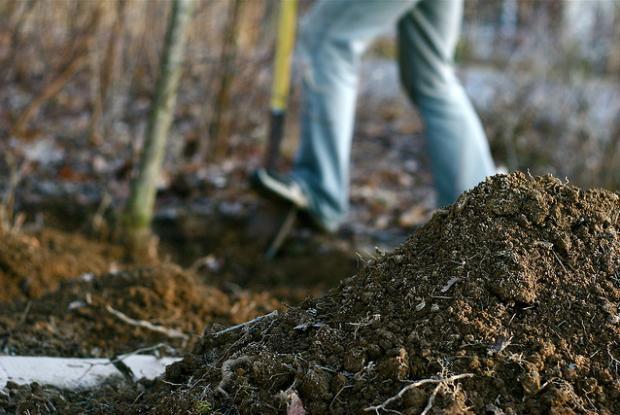 Pr paration du sol fertilisation arrosage espace pour for Arrosage des bulbes