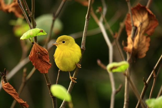Créez votre jardin pour les oiseaux   Espace pour la vie