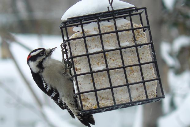 Créez votre jardin pour les oiseaux | Espace pour la vie