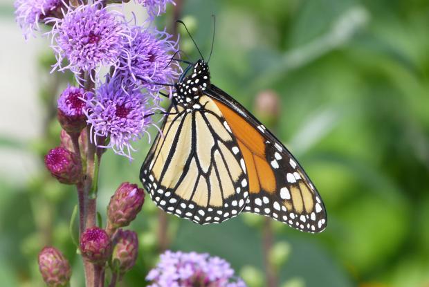 Jardin papillons espace pour la vie for Papillons jardin botanique 2016