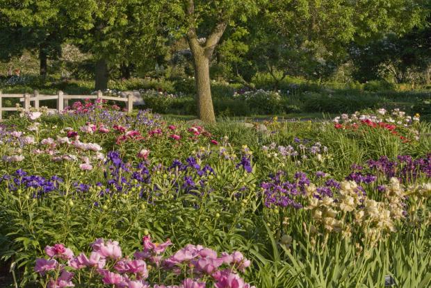 Un jardin pour les bouquets   Espace pour la vie