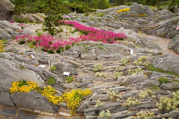 Cultivating alpine plants for rock gardens space for life for Amenagement jardin rocaille