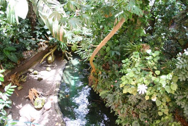 Landscape of the Tropical Rainforest.