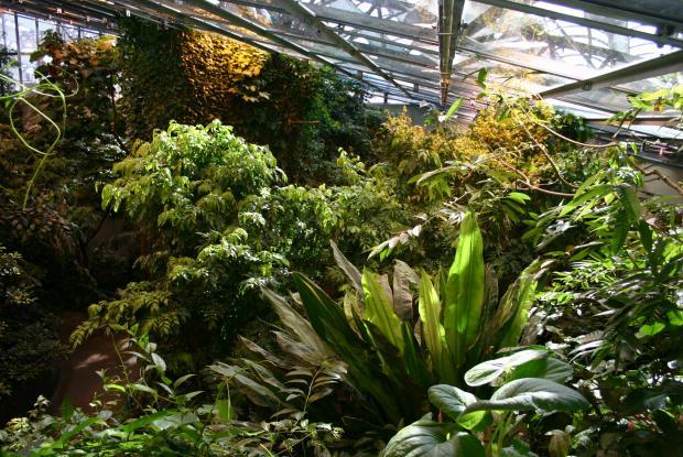 Végétation de la forêt tropicale humide.