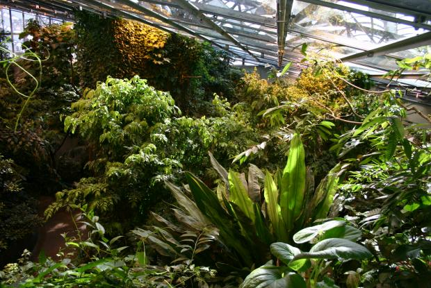 Vegetation of the Tropical Rainforest.