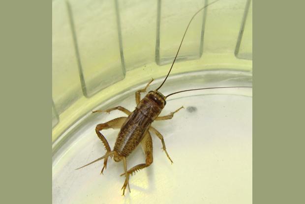 La classification des insectes espace pour la vie - Insecte dans les maisons ...