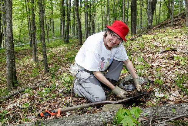 Sauvetage d'ail des bois