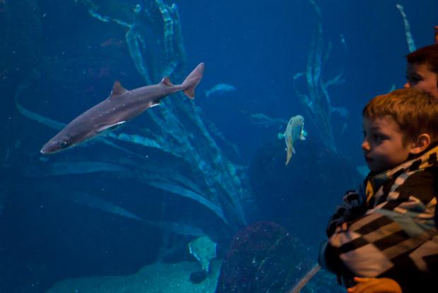 Deux élèves observent les poissons au paysage sous-marin du Golfe du Saint-Laurent.