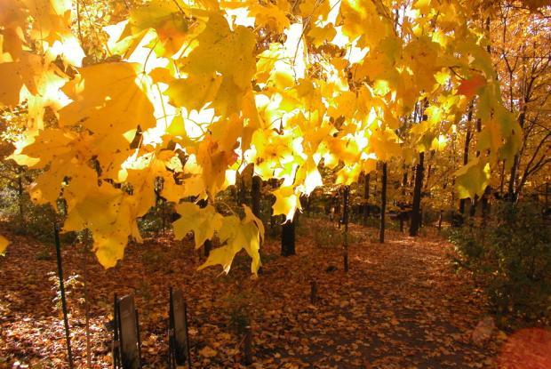 First Nations Garden in autumn.
