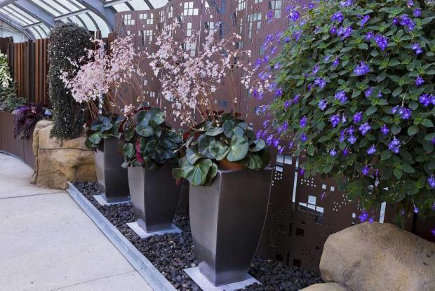 Begoniaceae and Gesneriads Greenhouse