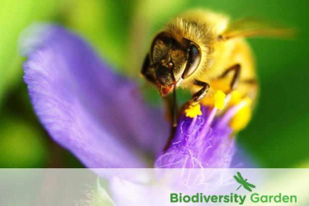 Biodiversity garden with logo
