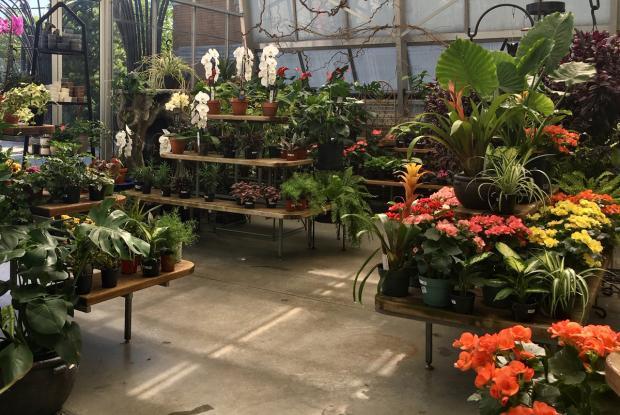 Jardin botanique gift shop