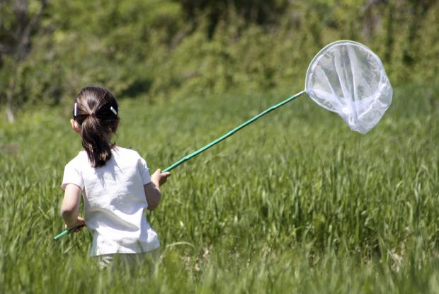 Young girl hunting butterflies
