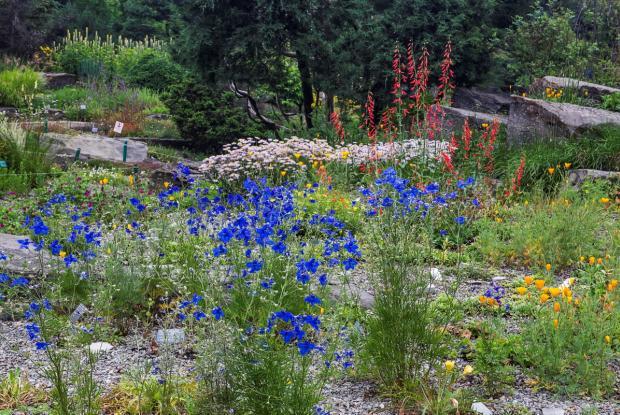 Alpine garden - general view