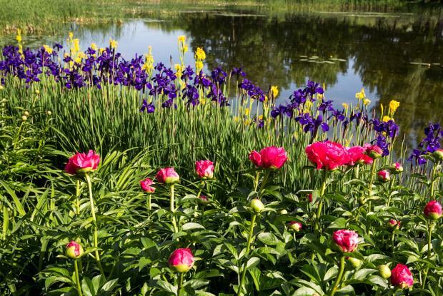 Vue sur l'étang au jardin du Ruisseau fleuri