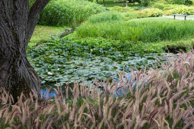 Creek at Japanese Garden