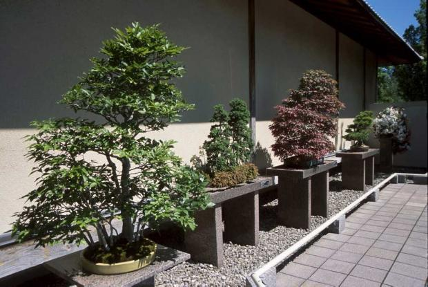 Gardens of the japanese garden space for life for Bonsai de jardin