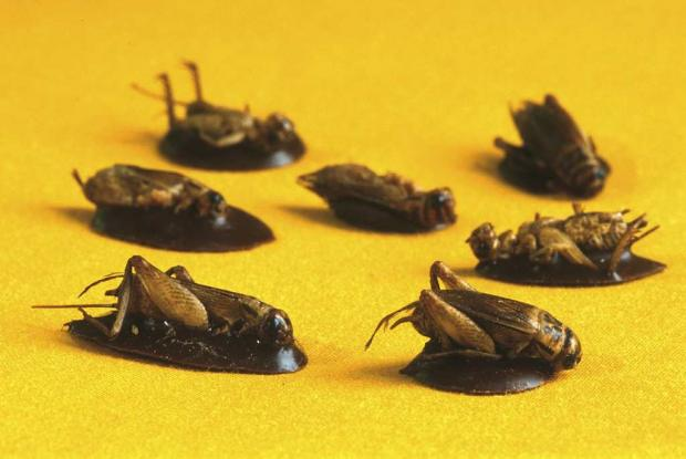 Insect Tastings.