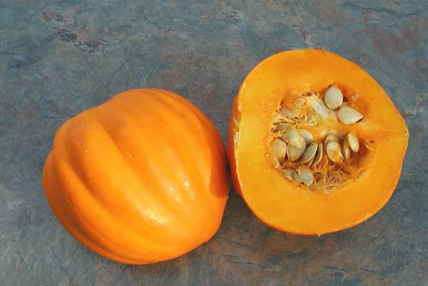 Cucurbita pepo 'Table Gold'
