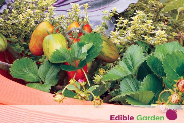 Edible garden with logo