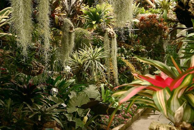 For t tropicale humide espace pour la vie for Solde plante jardin
