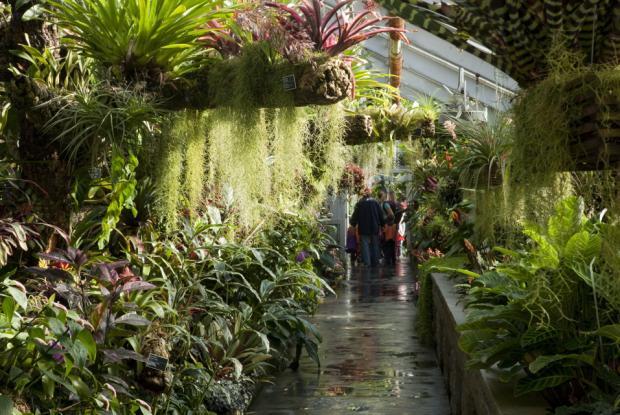 Greenhouse room gardens - For 234 T Tropicale Humide Espace Pour La Vie