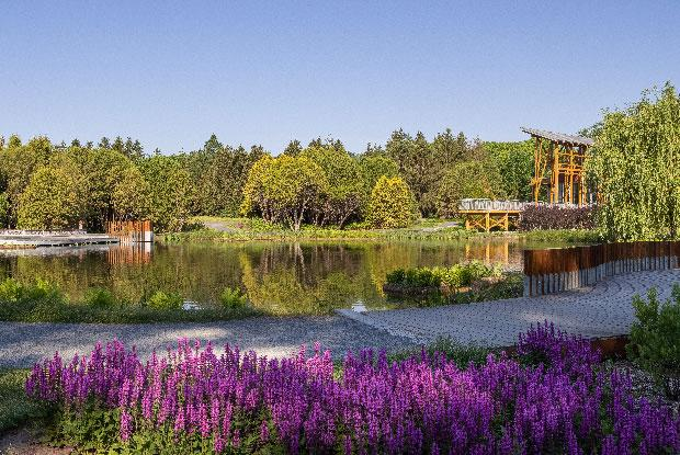 L'étang de la Maison de l'arbre Frédéric-Back entouré de verdure