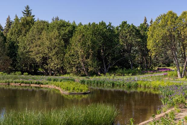 Une des berges réaménagées de l'étang de la Maison de l'arbre Frédéric-Back