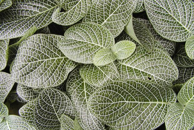 Soins d 39 hiver de vos plantes d 39 int rieur espace pour la vie - Plante d interieur peu de lumiere ...