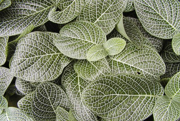 Caring for indoor plants in the wintertime | Space for life