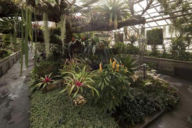 Serre de la Forêt tropicale humide