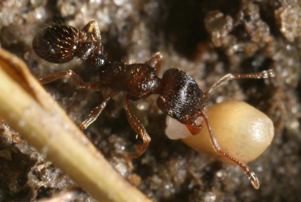 Ants, Québec, Canada.