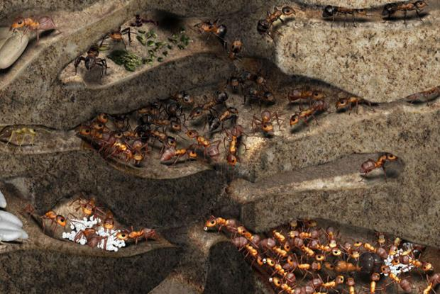 Vue d'une fourmilière