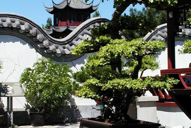 Les bonsa s et les penjings espace pour la vie for Jardin expose nord