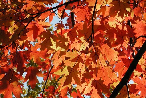 Autumn at the Botanical Garden