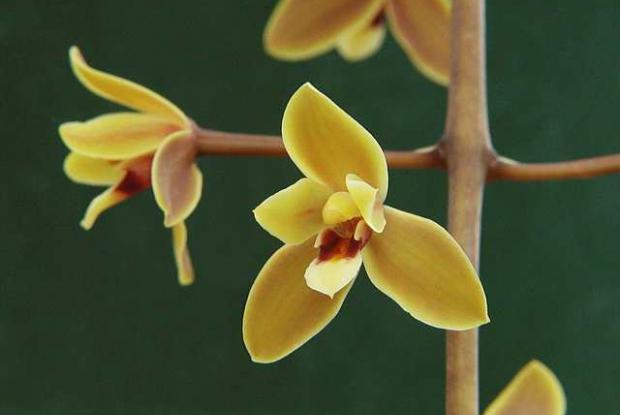 Floraison et arrosage | Espace pour la vie